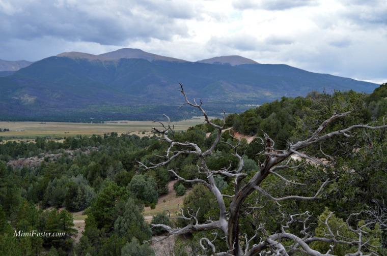 Canon City Tree